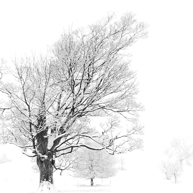 """The leaning old tree, Rothwell"" stock image"