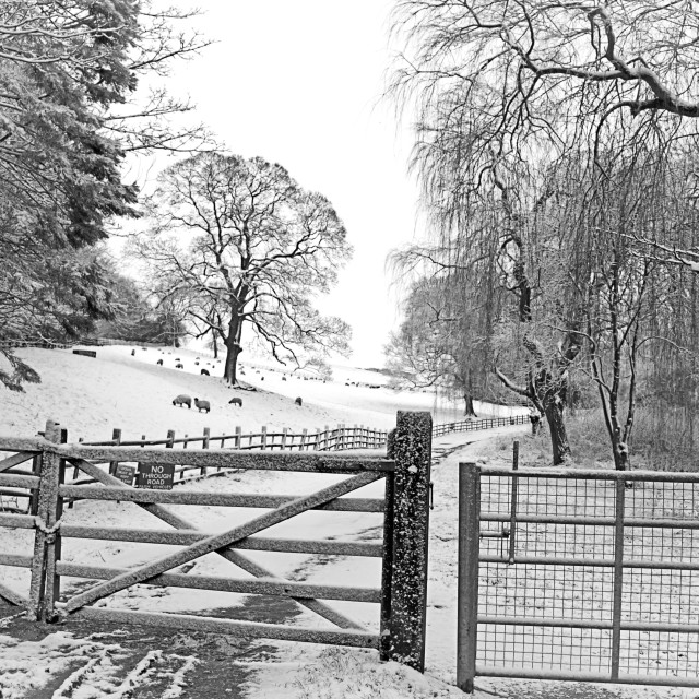 """'No Through Road'. The gate to the lane, after the snow"" stock image"