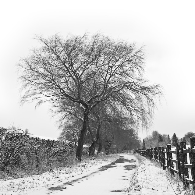 """A wintery lane after the snowfall"" stock image"