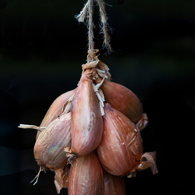 """Hanging onions"" stock image"