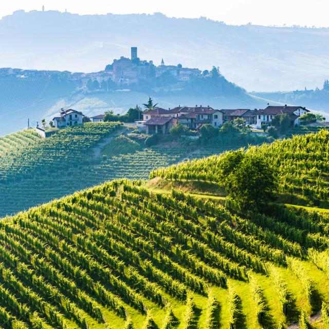 """Barolo wine region, Langhe, Piedemont, Italy"" stock image"