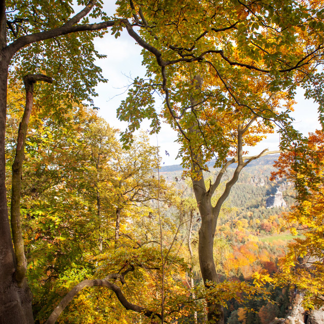"""Autumnal Trees. Saxon Switzerland"" stock image"