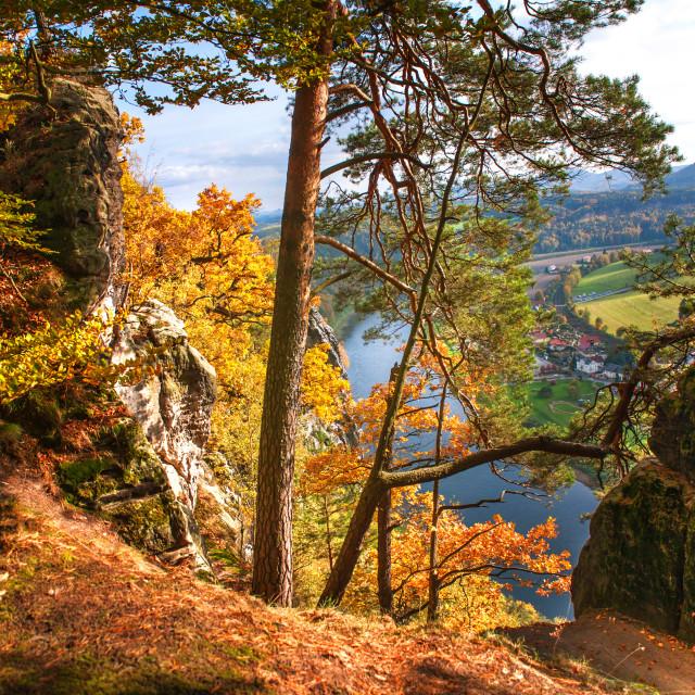 """Trees On The Edge. Saxon Switzerland"" stock image"