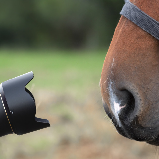 """""""Camera lenses and a horse nose"""" stock image"""