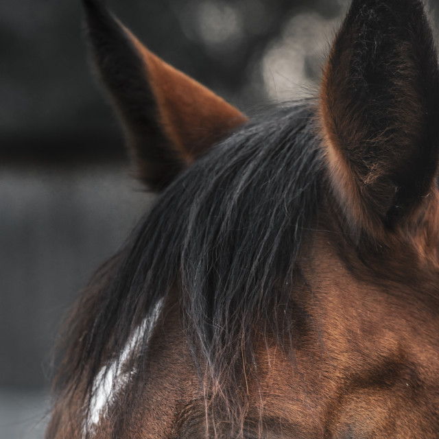 """Horse portrait with expressive eye"" stock image"
