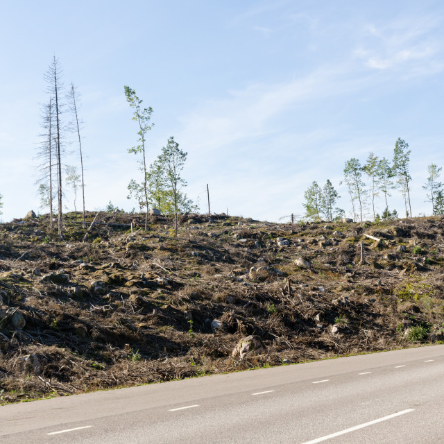 """Clear cut forest by roadside"" stock image"
