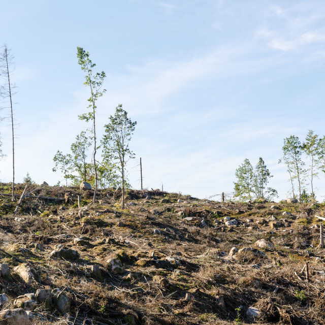"""""""Renewable recources, harvested forest"""" stock image"""