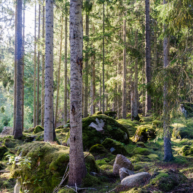 """Beautiful bright green forest"" stock image"