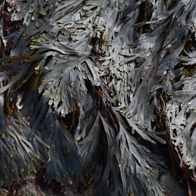 """Seaweed Abstract"" stock image"