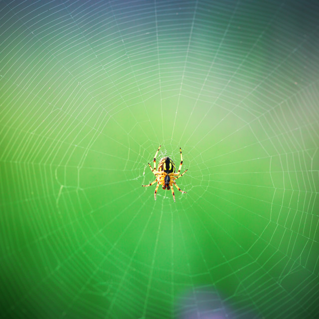 """Spider on the web, macro shot"" stock image"