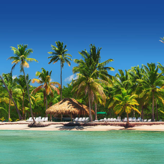 """Panoramic view of Exotic Palm trees on the tropical beach"" stock image"