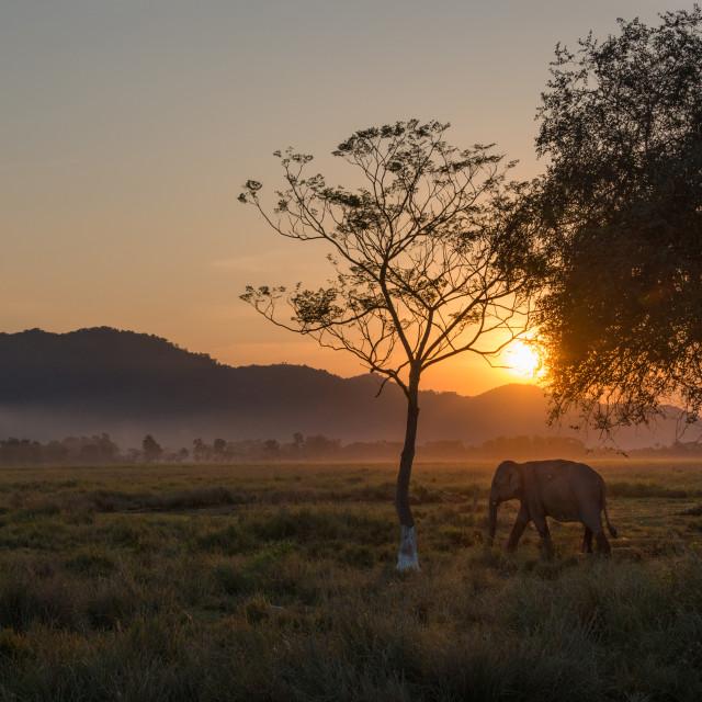 """""""A baby elephant at Kaziranga National Park, Assam, India"""" stock image"""