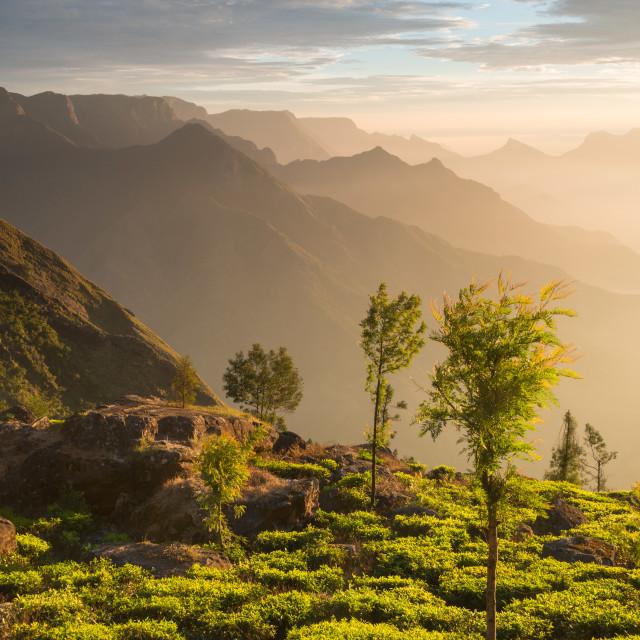 """""""Sunrise at Kolukkumalai in Kerala, India"""" stock image"""