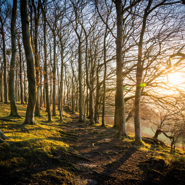 """A winter sunrise at Sharpenhoe Clappers in Bedfordshire"" stock image"