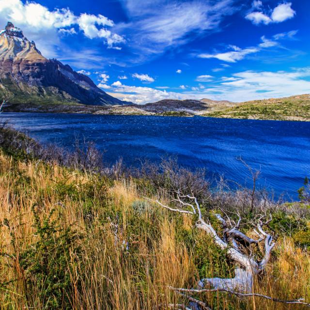 """Lago Skottsberg"" stock image"