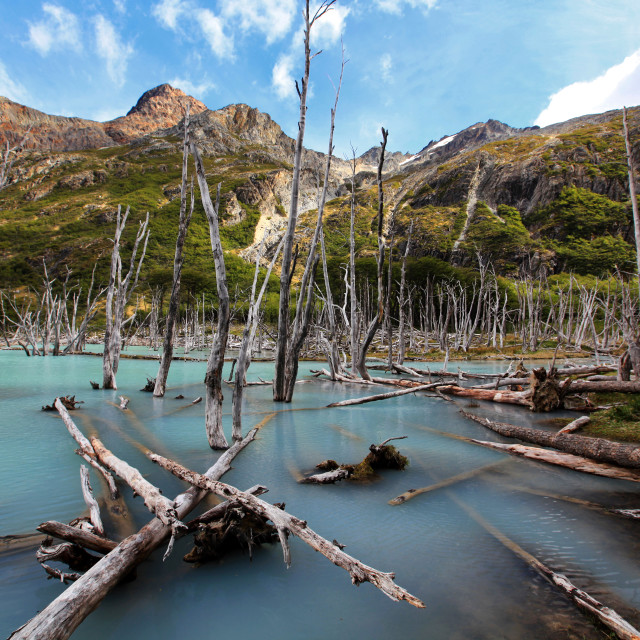 """Dead trees, Laguna Esmeralda, Ushuaia, Argentina"" stock image"