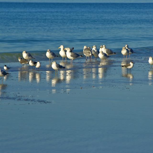 """Seagulls On Siesta Key Beach"" stock image"
