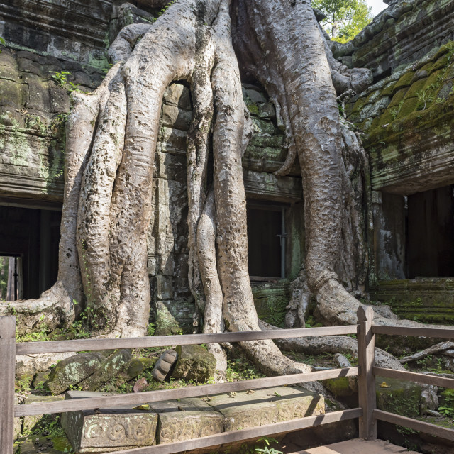 """Ta Prohm Temple, Angkor"" stock image"