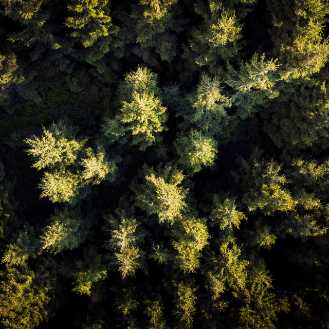 """Aerial photo of an evergreen forest during golden hour"" stock image"