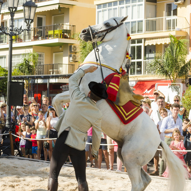 """Andalusian horse, horse dressage celebration, event, Fuengirola, Málaga, Andalusia, Spain. September 2018"" stock image"