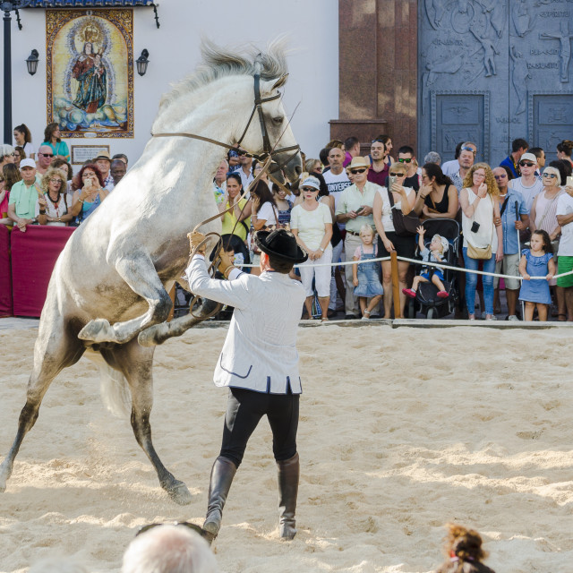 """Day of the horses, horse dressage celebration, event, Fuengirola, Málaga, Andalusia, Spain."" stock image"