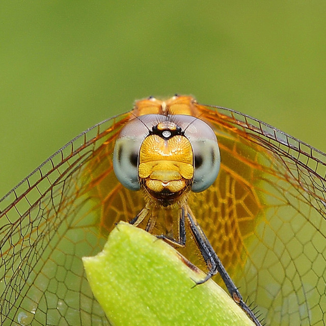 """The smiling dragonfly"" stock image"