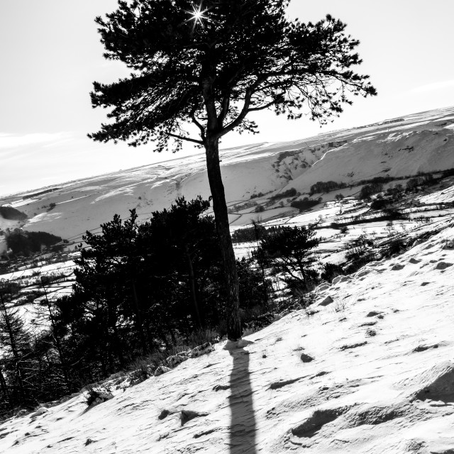 """Back Tor Snow Tree"" stock image"