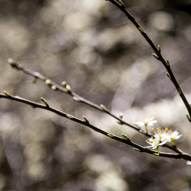 """""""Spring Blossoming"""" stock image"""