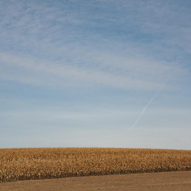 """Corn hill"" stock image"