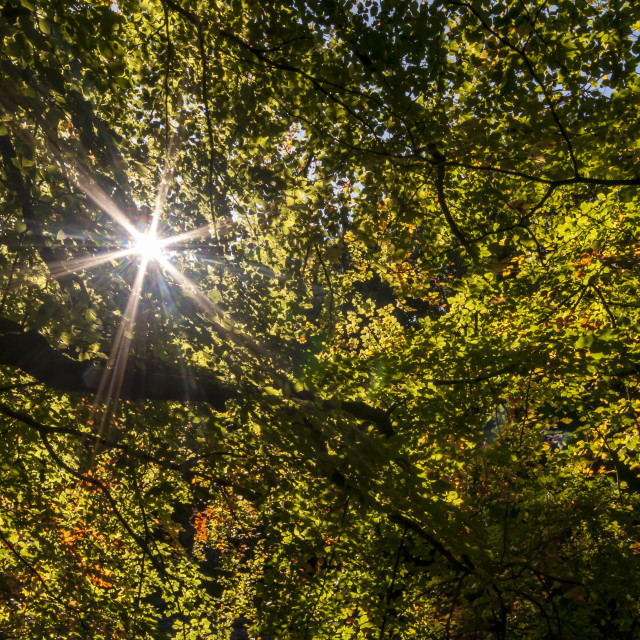 """Autumnal Starlight"" stock image"
