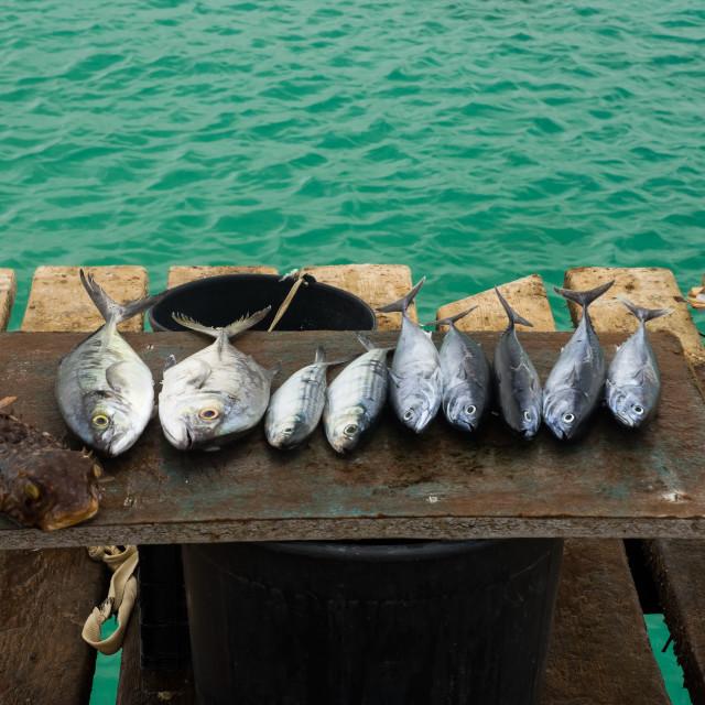 """Pick a fish"" stock image"