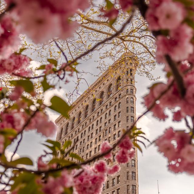 """Flatiron building in Midtown Manhattan viewed through trees"" stock image"