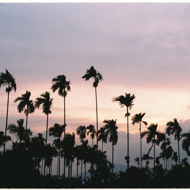 """Twilight sky with silhouette areca tree"" stock image"