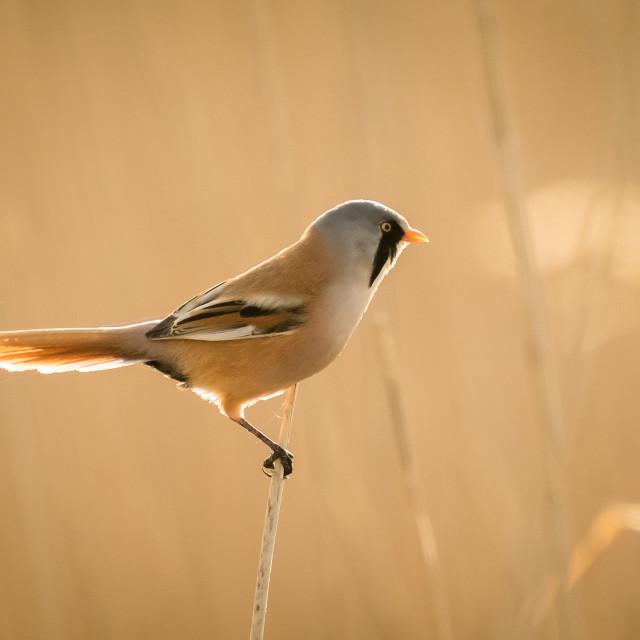 """Early morning bird"" stock image"