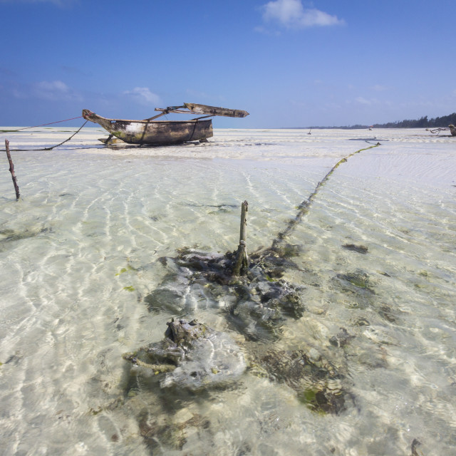"""Dhow on a tropical beach"" stock image"