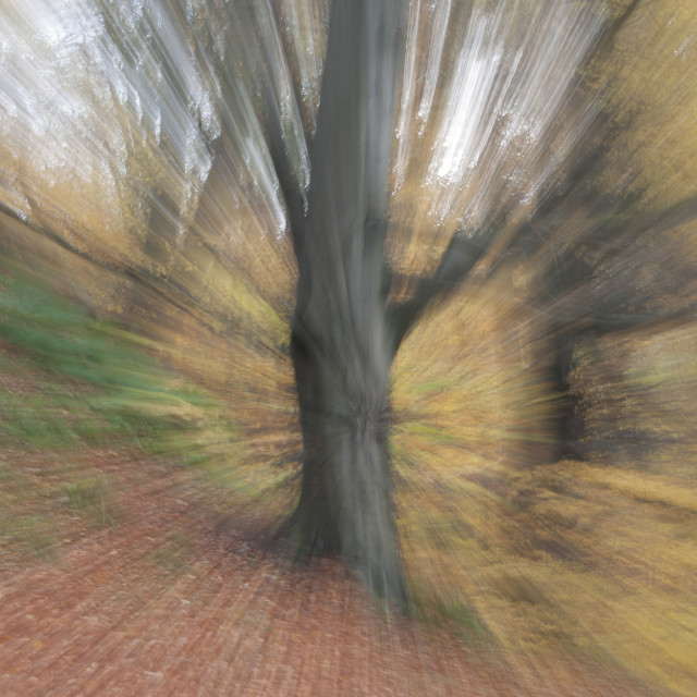 """Autumnal Zoom Burst"" stock image"