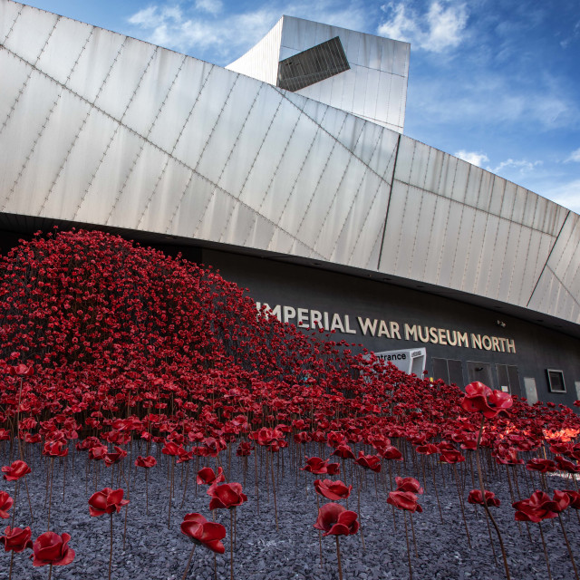 """The Wave display of poppies"" stock image"