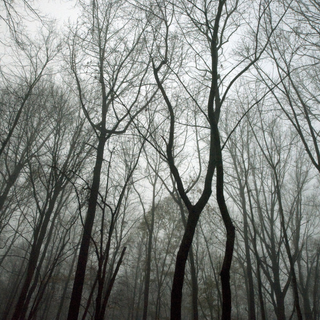 """""""Moody winter forest."""" stock image"""