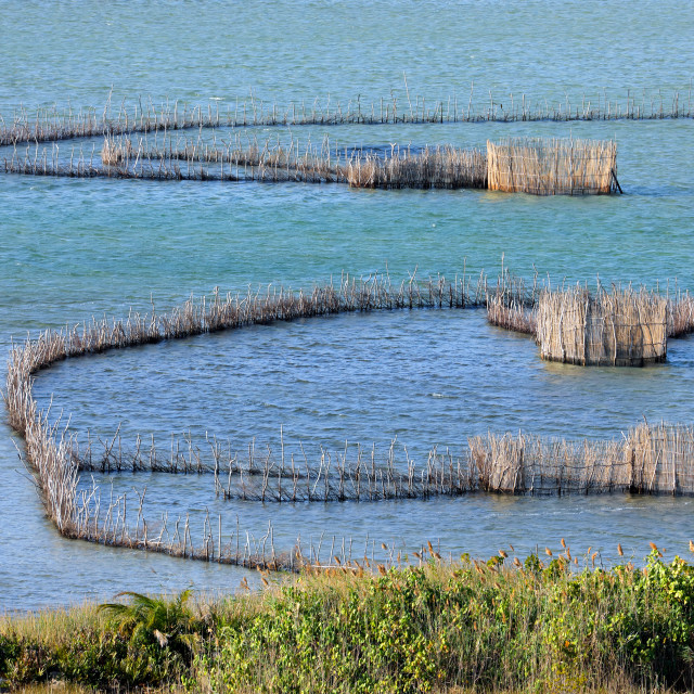 """Fish traps in the Kosi Bay estuary"" stock image"