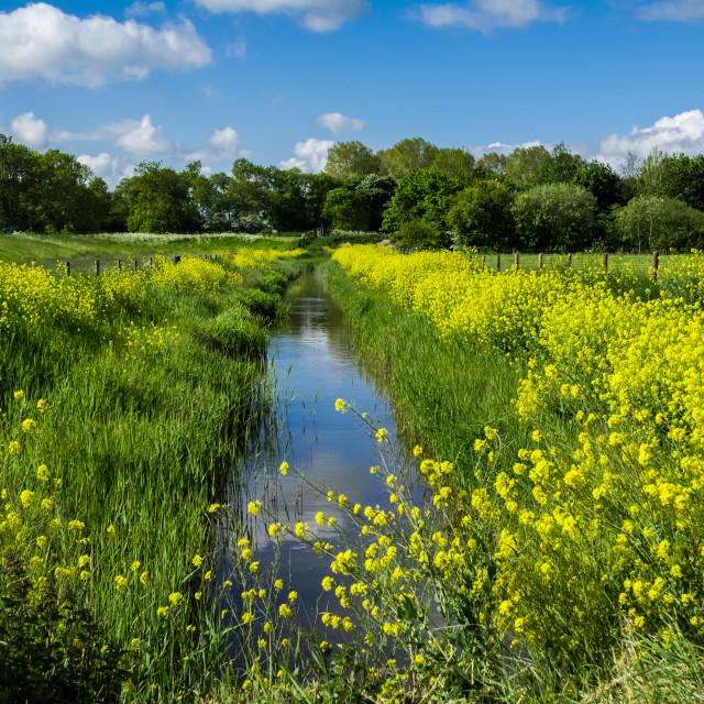 """Summer at Manby Wetlands"" stock image"