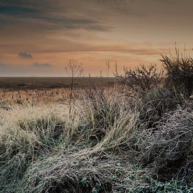 """Winter on the Salt Marsh"" stock image"