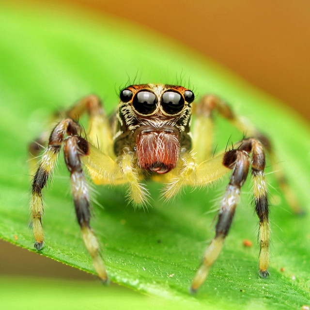 """Portrait of spider"" stock image"