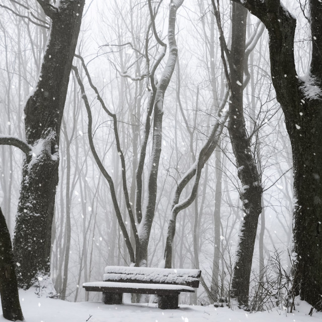 """""""Snowfall in the forest and a wooden bench"""" stock image"""