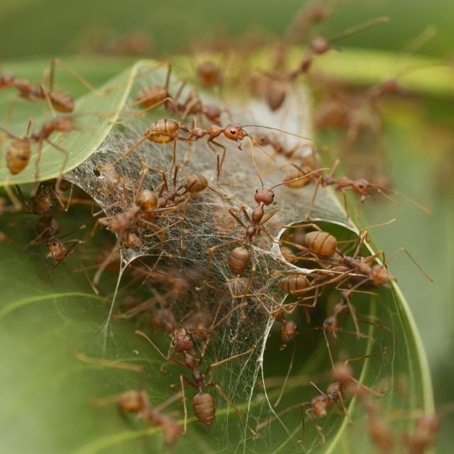 """""""Nest frenzy"""" stock image"""