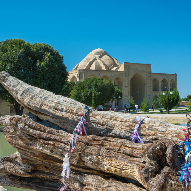 """The trunk of an old mulberry tree in the memorial complex Bahoud"" stock image"