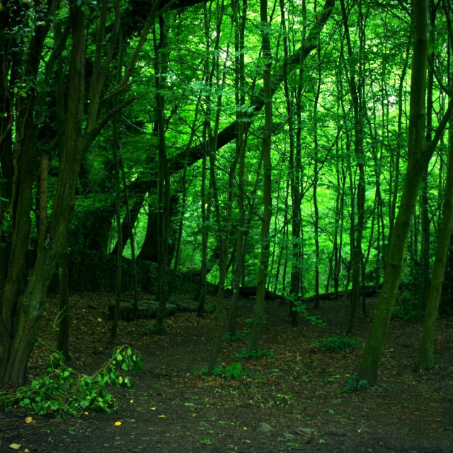 """Green Lonely Woods"" stock image"