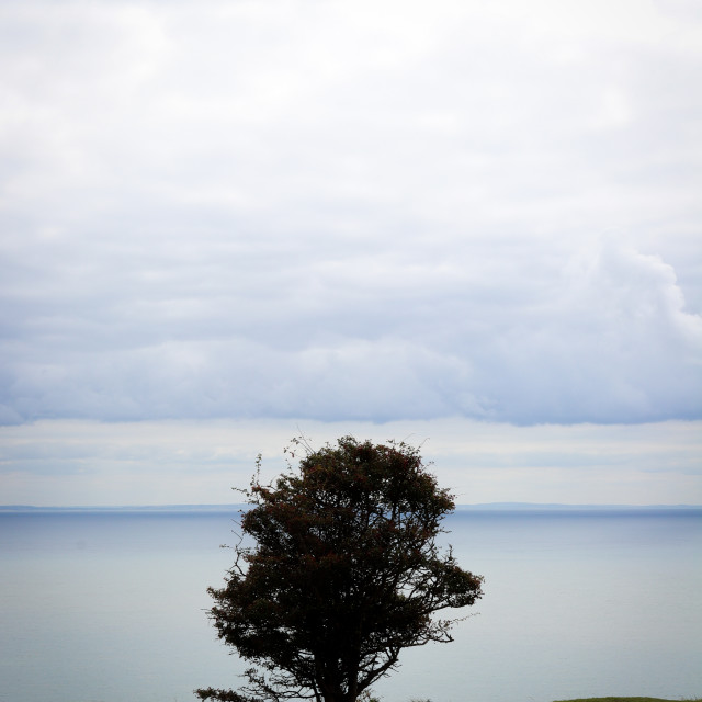 """""""Lonesome Tree Up On the Cliffs"""" stock image"""