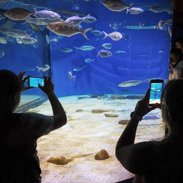 """Smartphone Photographers"" stock image"
