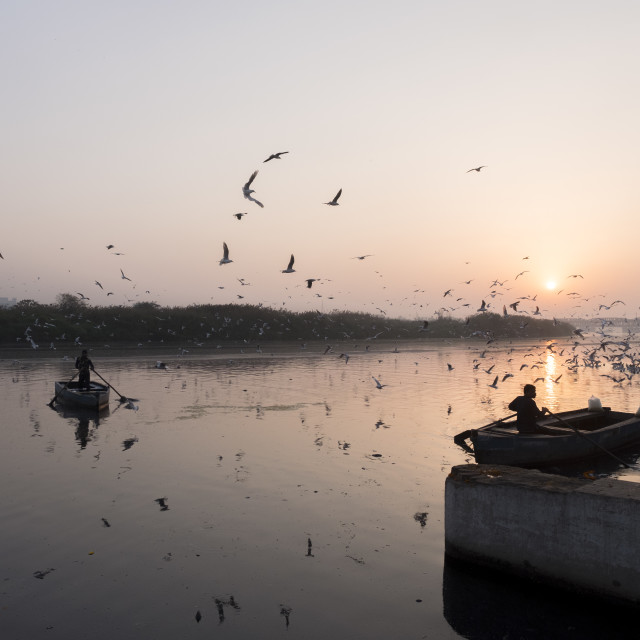 """Bird migration in Yamuna Ghat, New Delhi"" stock image"