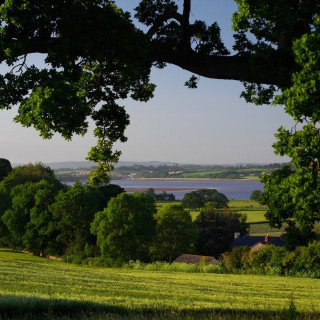 """Exe Estuary from Powderham."" stock image"